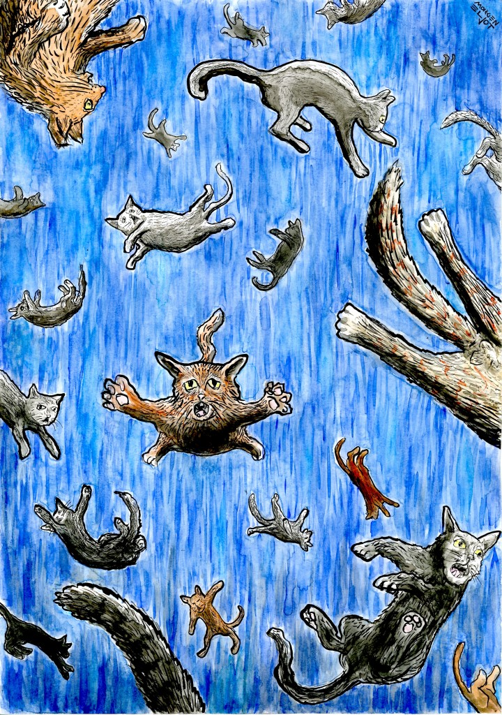 rain of cats (invocation to El Niño)
