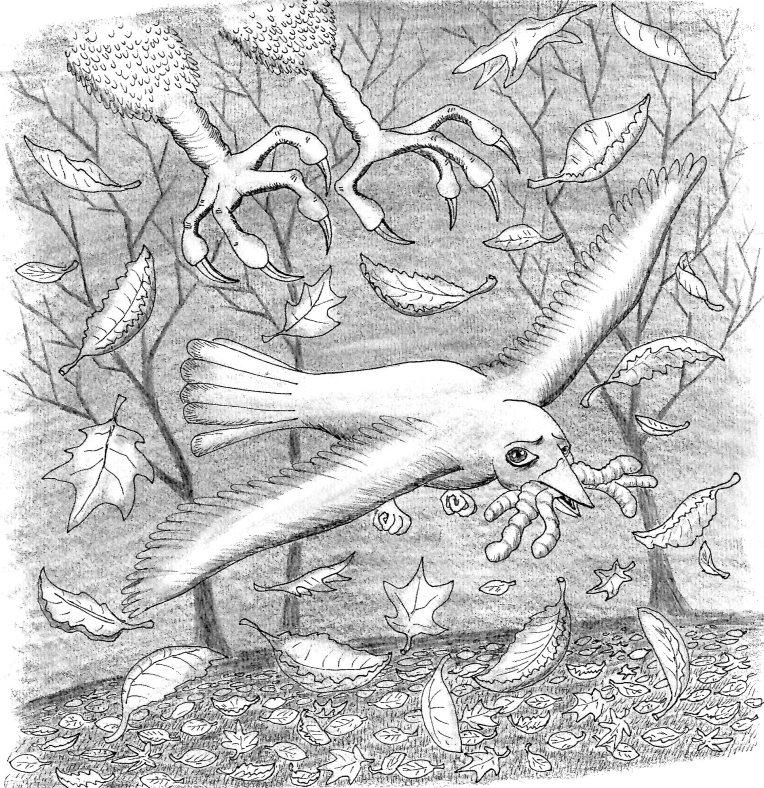 wirdy bird by morgen eljot 6