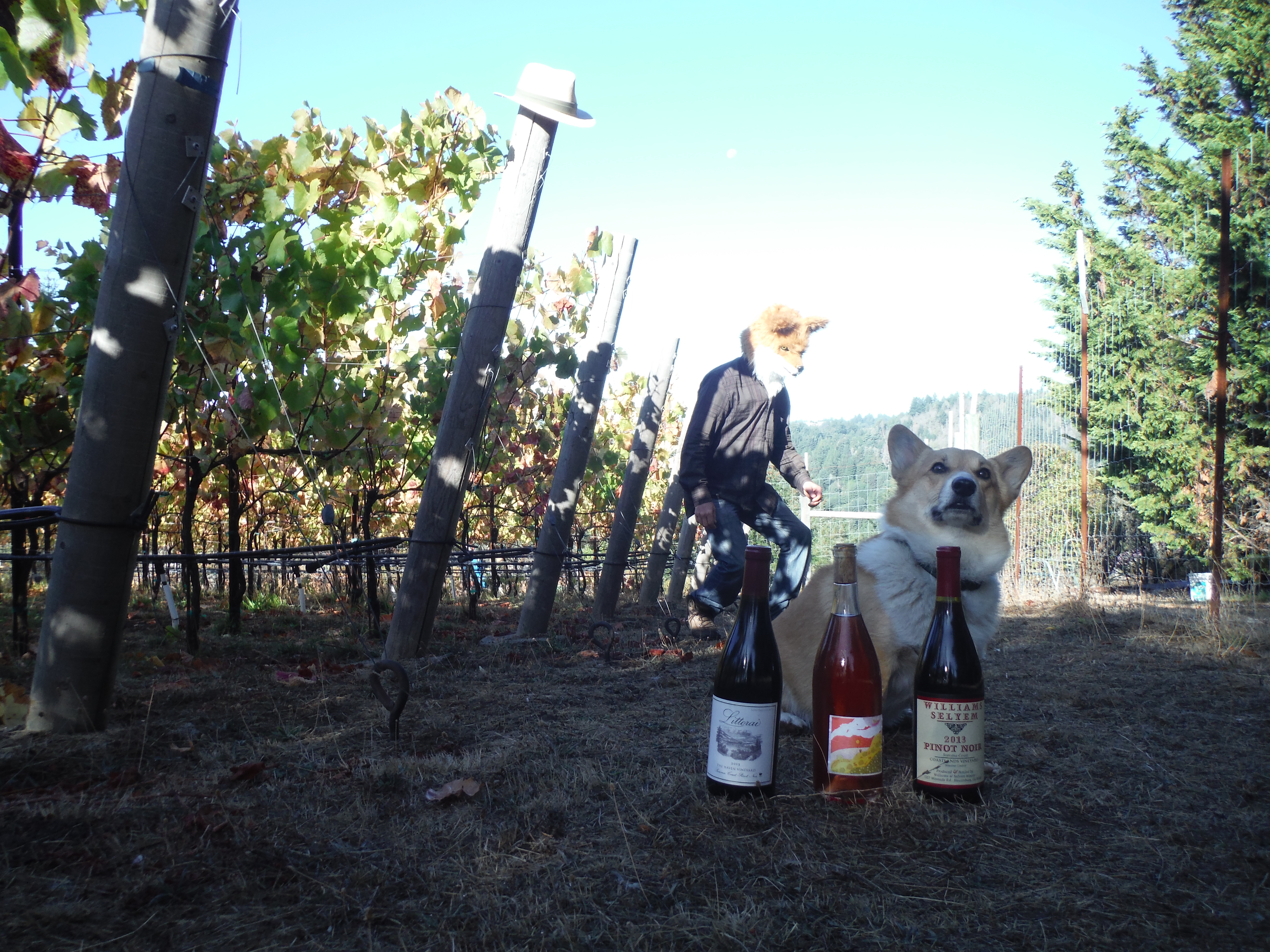 2019 wine harvest